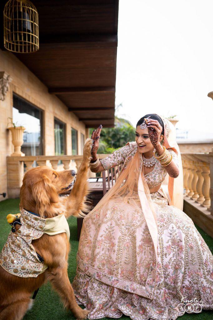 ivory bridal lehenga color for wedding