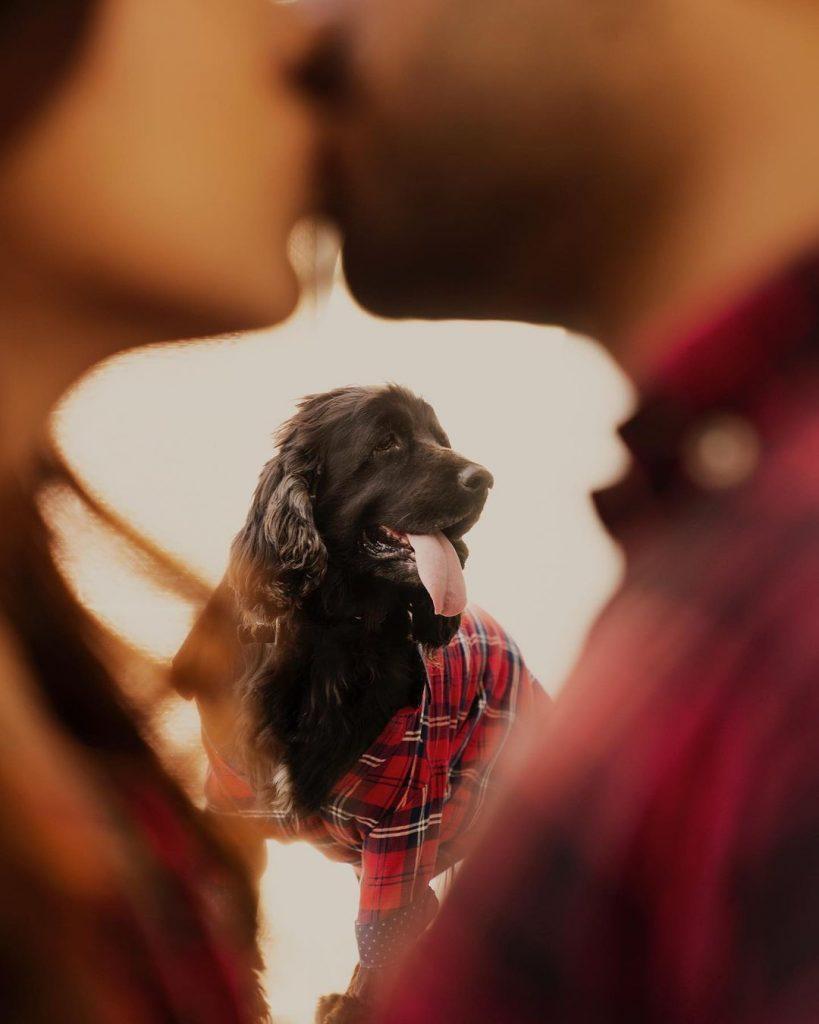 couple photoshoot with animals