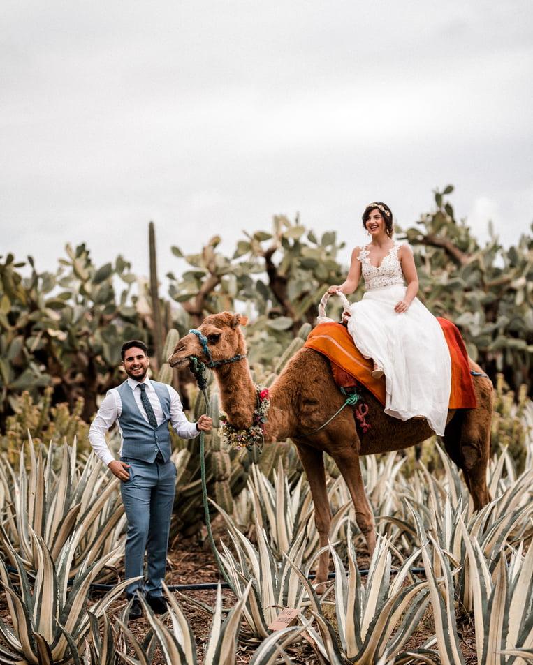 camel latest wedding reception entry