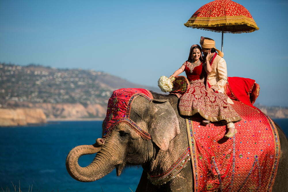 elephant best bride and groom entry ideas